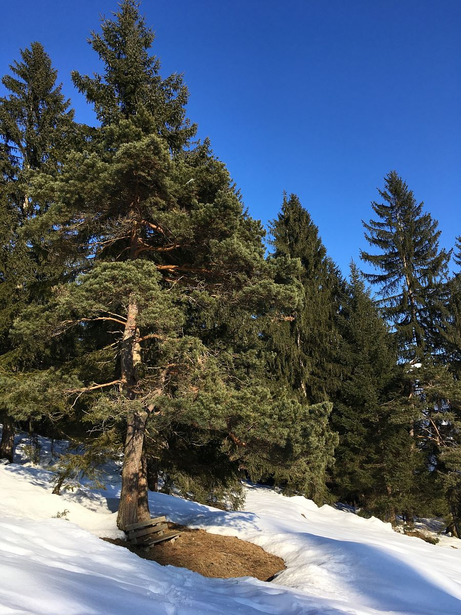 Winterwandern in St. Johann in Tirol