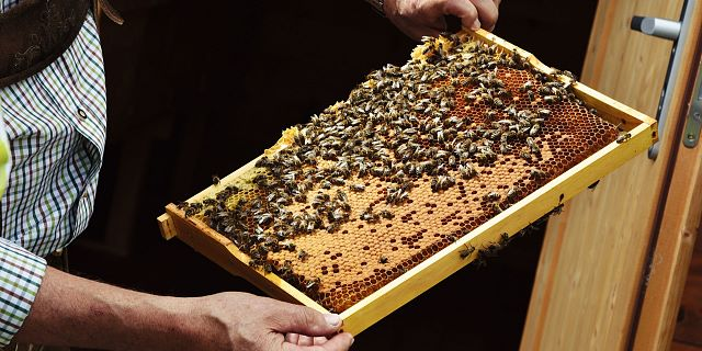 Bienentherapie